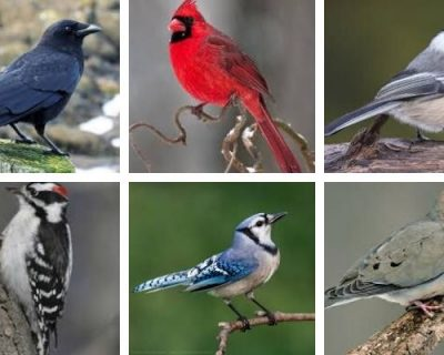 Let's Talk Birds: Easy Ways to Get Kids Birding
