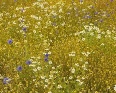 Let's Talk Wildflowers